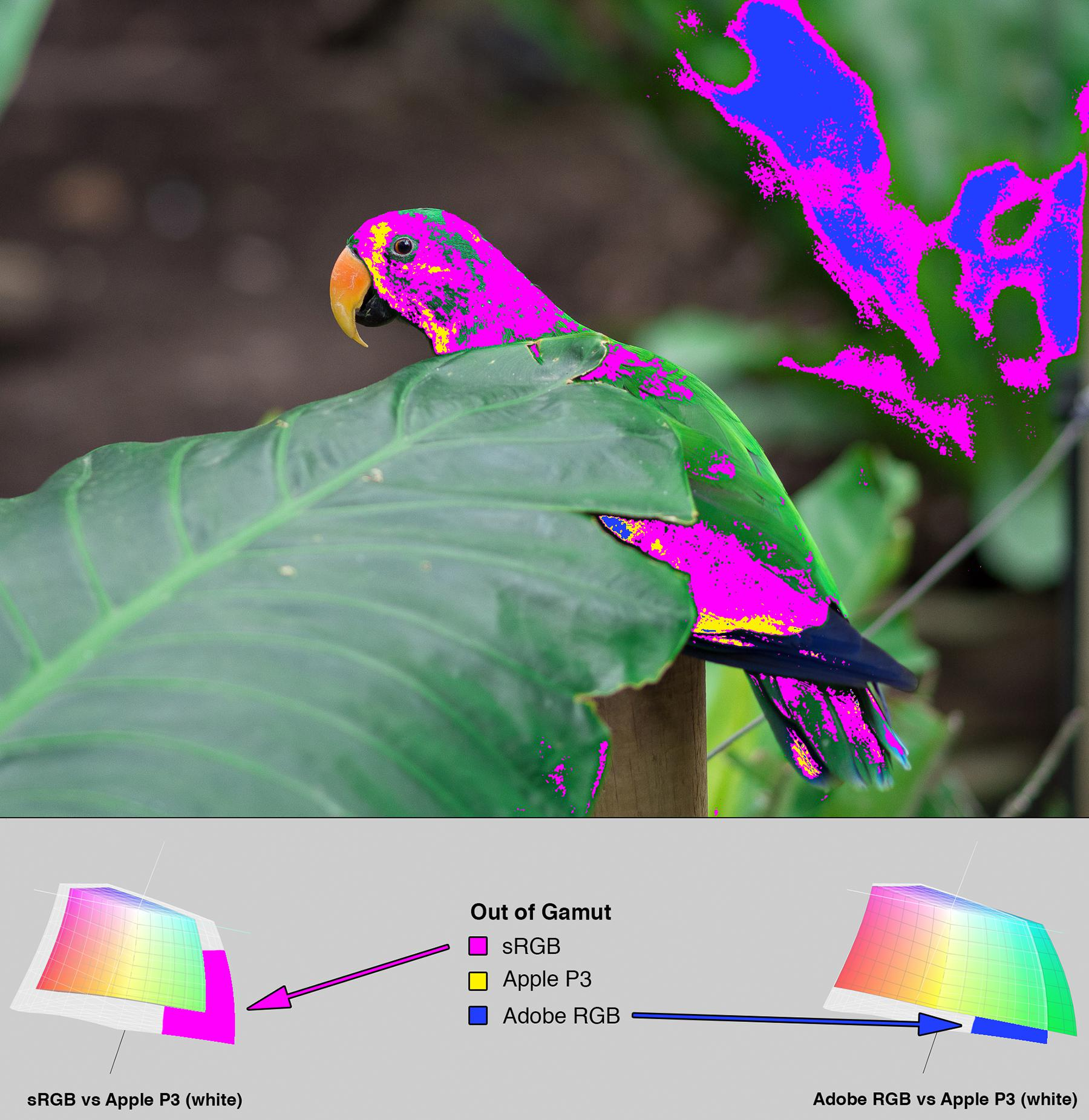 Parrot photo from Figure 12. Overlaid with a heat map indicating which ares of the image are out of gamut. At the bottom of the image is a section with 3D LAB plots showing how the colorspaces differ.