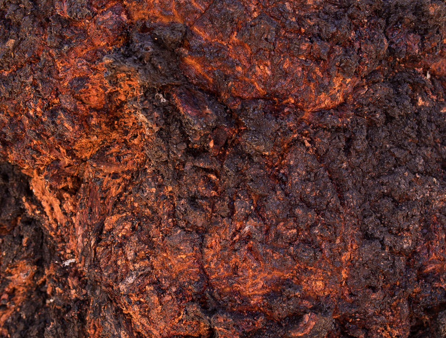 An abstract fractal pattern that looks like lava, it is actually tree bark.